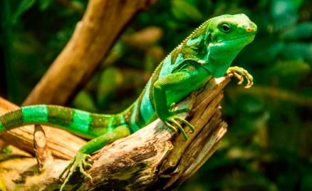 Контактный зоопарк и «Крокопарк»