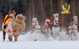 Прогулки в экипаже и конное шоу