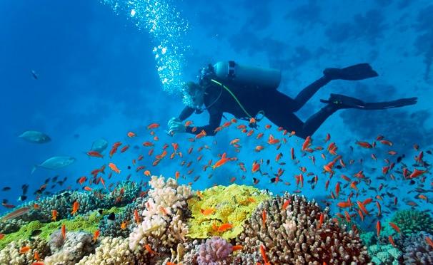 Скидка на Базовый курс дайвинга Open Water Diver в аквапарке «Мореон» от клуба «Морские ангелы». Скидка до 75%