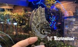Выставка бабочек и беспозвоночных