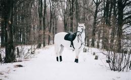 Конные прогулки в Митино