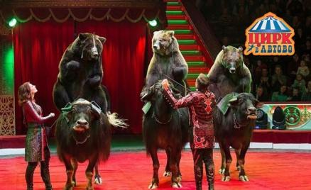 Билеты на шоу «Медведи на буйволах»