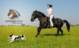 Катание на лошадях, пони и ослике