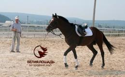 Конный клуб «Белая лошадь»