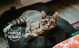 Отдых в котокафе «Город кошек»
