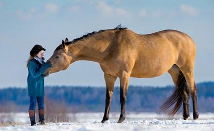 Прогулки на лошадях: 1 или 2 часа