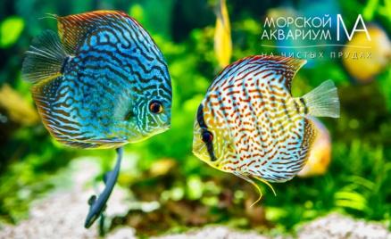 «Морской аквариум на Чистых прудах»