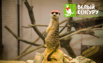 Контактный зоопарк «Белый кенгуру»