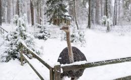 Экскурсия по страусиной ферме